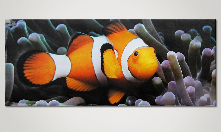 Nemo the Clown 120x50cm Leinwandbild