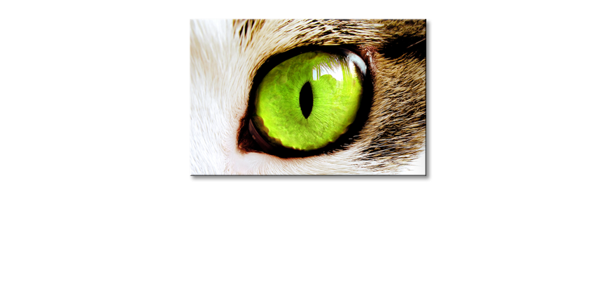 Das-Wandbild-Cats-Eye