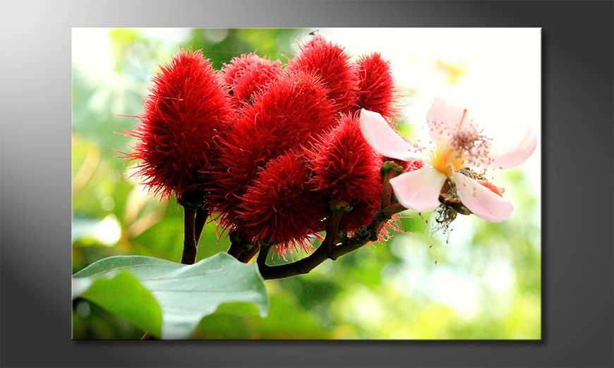 Das-moderne-Bild-Beauty-Red-Bud