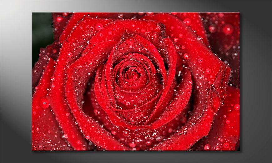 Das moderne Wandbild Morning Rose
