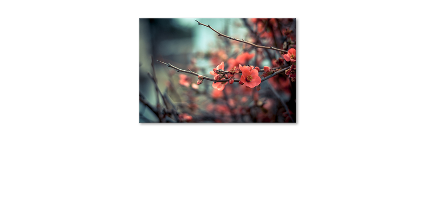Das-moderne-Wandbild-Red-Blossoms