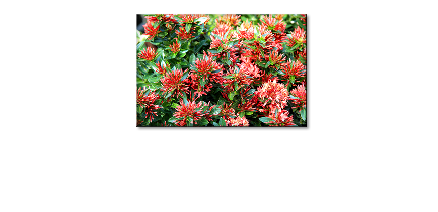 Das-moderne-Wandbild-Red-Green-Nature