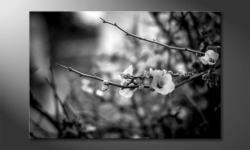 Das schöne Bild Beautiful Blossoms