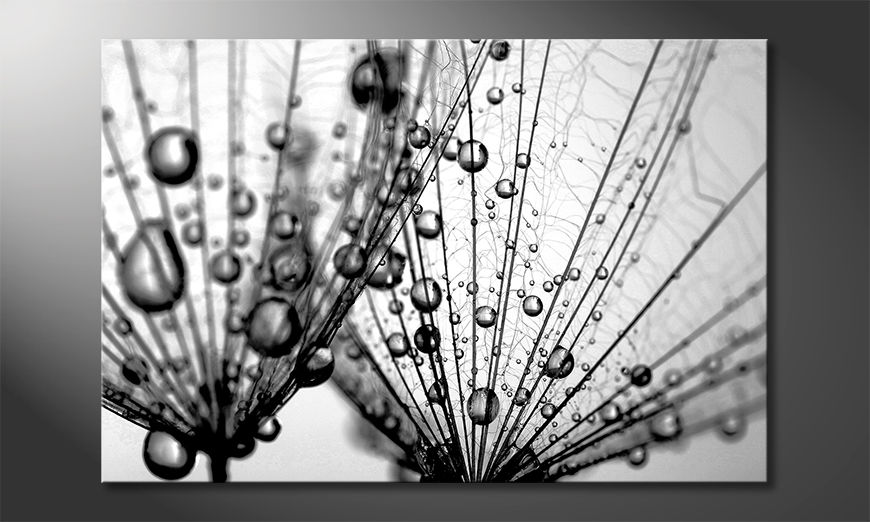 Das schöne Bild Dandelion Seed