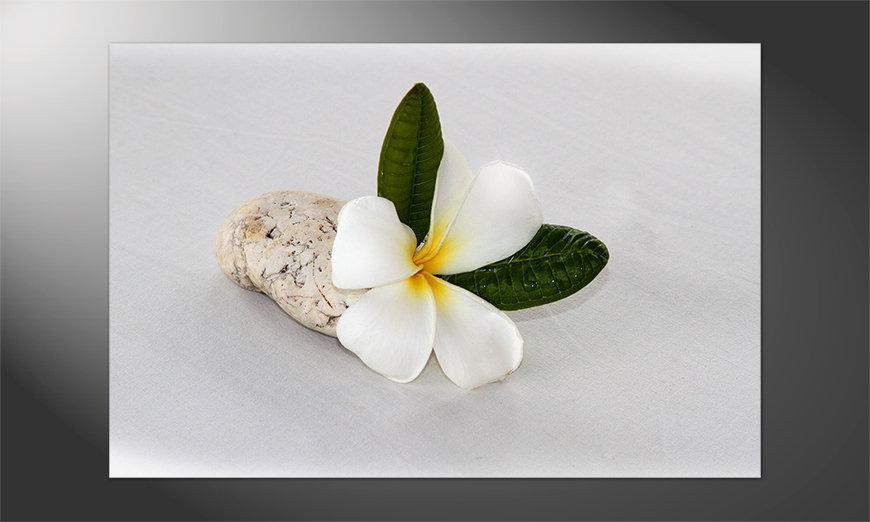 Blumen als Poster: Beauty Blossom