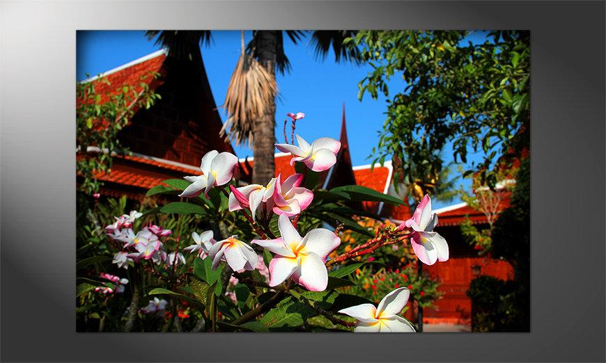 Blumen als Poster: Thaiday