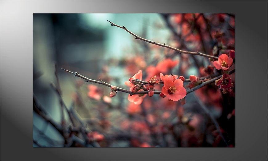 Blumen auf Poster: Pink Blossoms