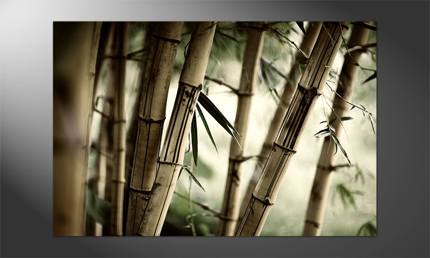 Das Premium Poster Bamboo