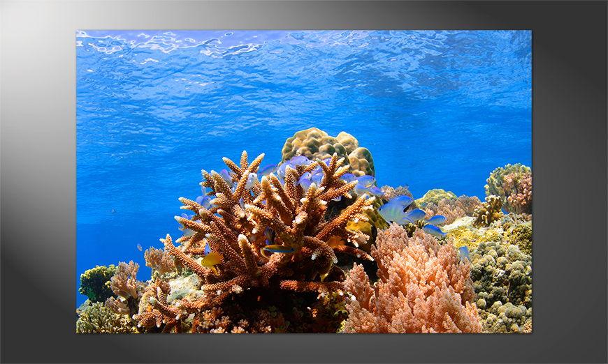 Das Premium Poster Coralsreef