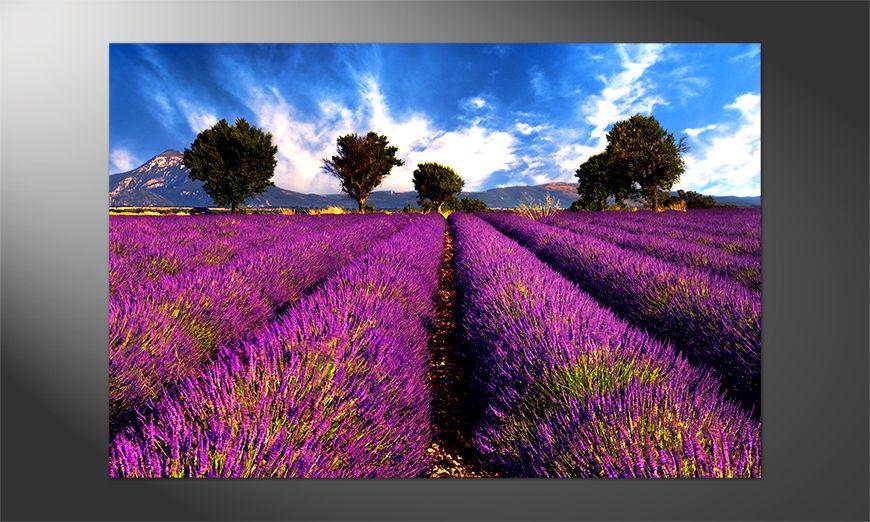 Das Premium Poster Lavender