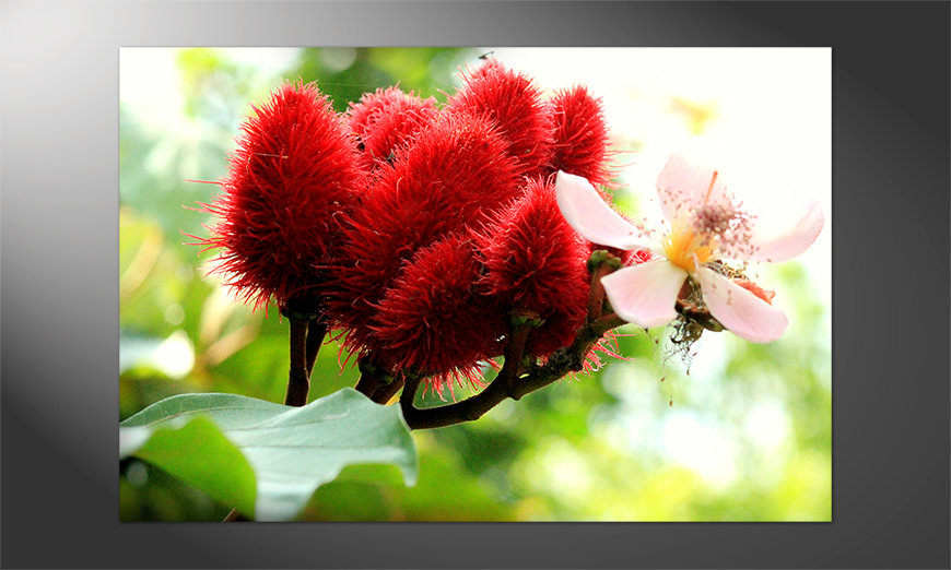 Das-brilliante-Poster-Beauty-red-Bud