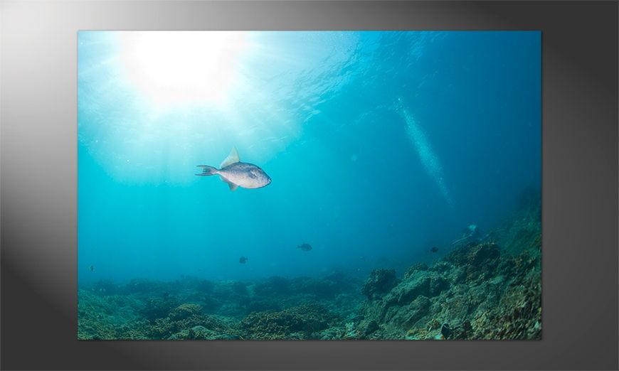 Das neue Premium Poster Colorful Reef
