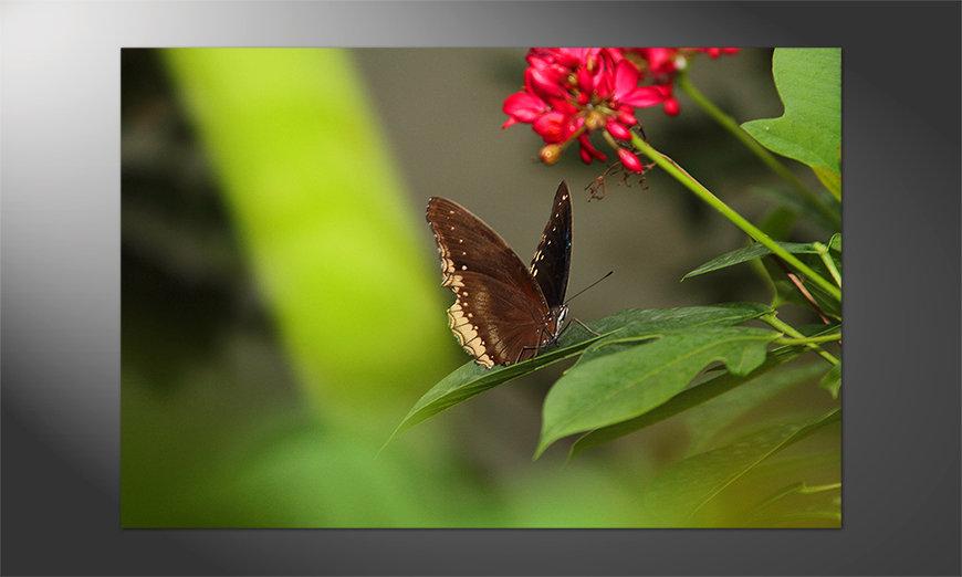 Das wunderschöne Poster Brown Butterfly