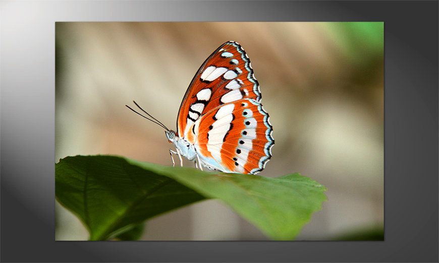 Das wunderschöne Poster Orange Butterfly