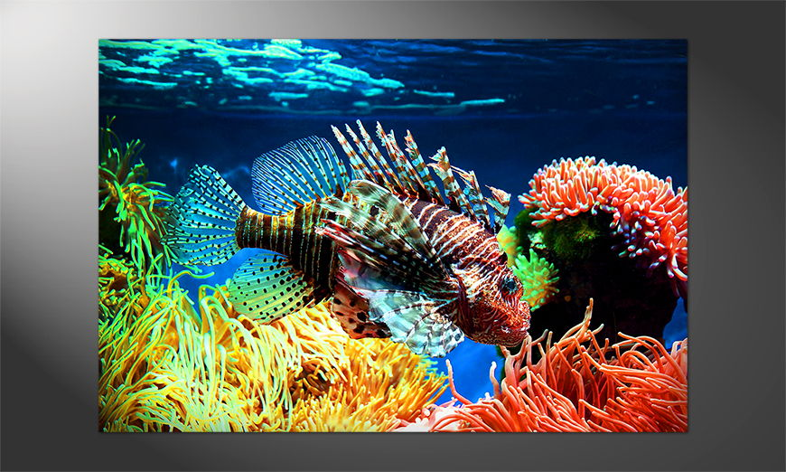 Unser-Premium-Poster-Lovely-Reef