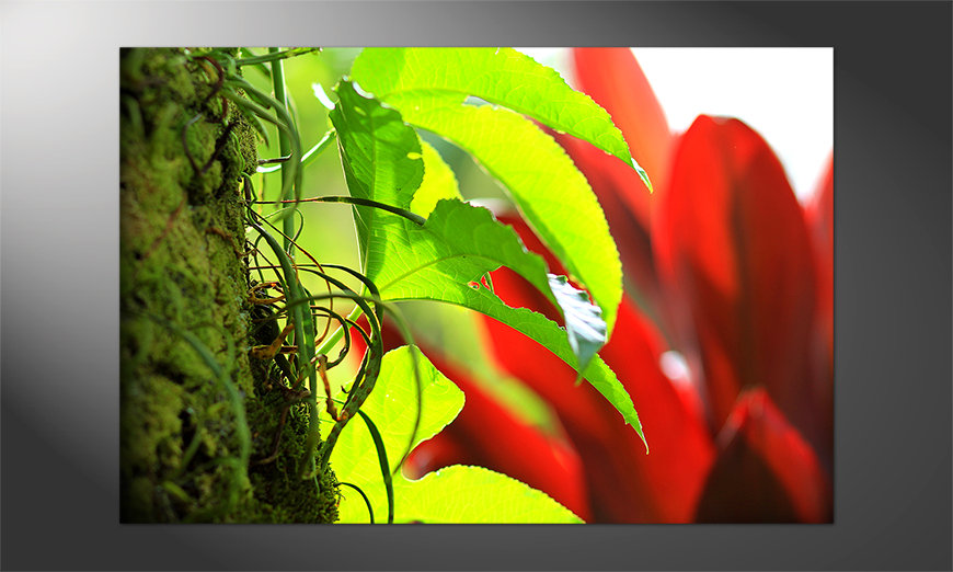 Unser-Premium-Poster-Red-Green-Nature