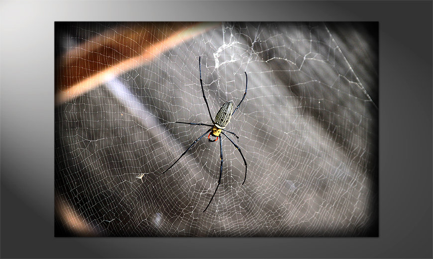 Unser-neues-Premium-Poster-Beauty-of-Spider