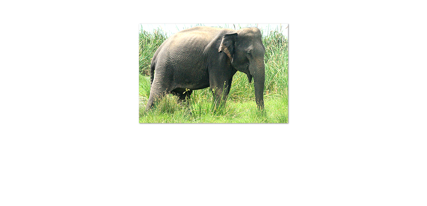 Unser-neues-Premium-Poster-Old-Elephant