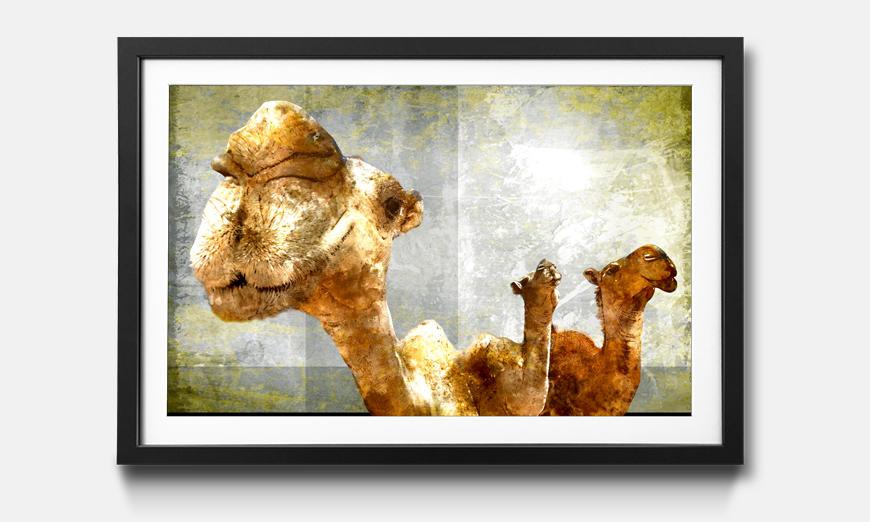 Bild gerahmt Camel Gang