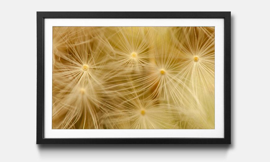 Bild gerahmt Dandelion