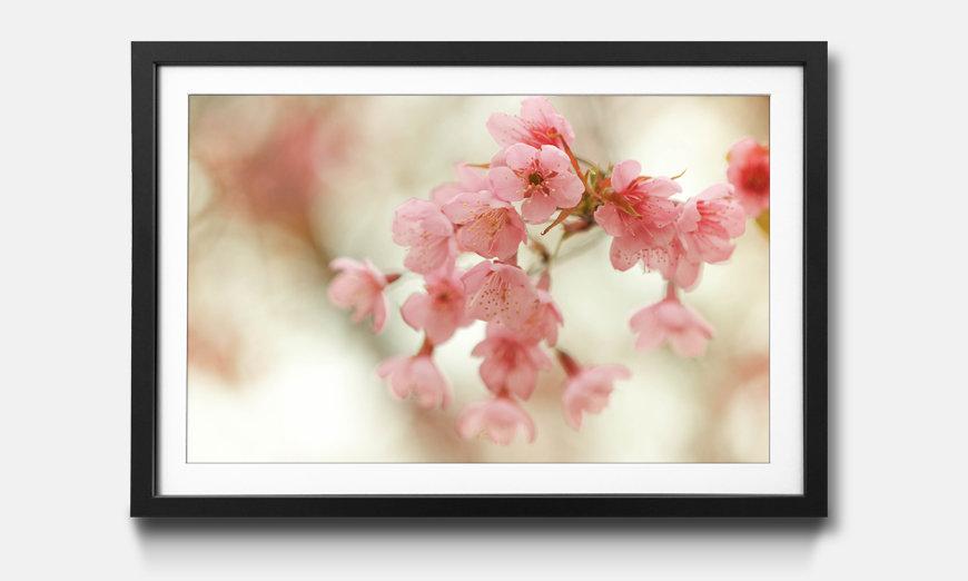 Das gerahmte Bild Cherry Blossoms