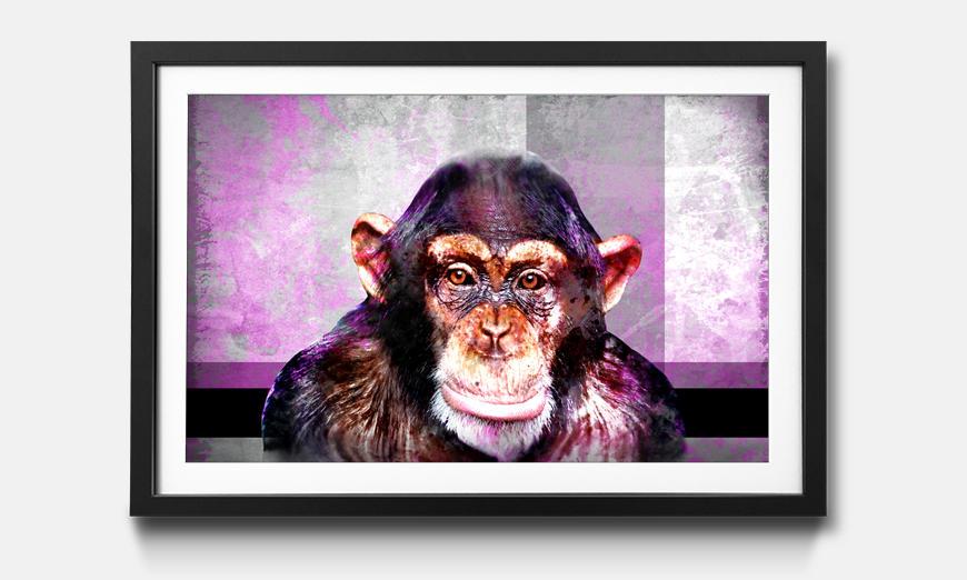 Das gerahmte Bild Mr. Monkey