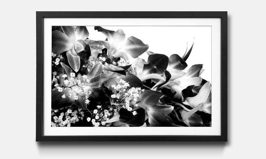 Das gerahmte Bild Orchid Blossoms