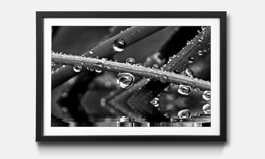 Das gerahmte Bild Water Drops