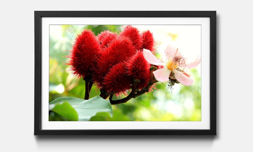 Das gerahmte Wandbild Beauty Redbud