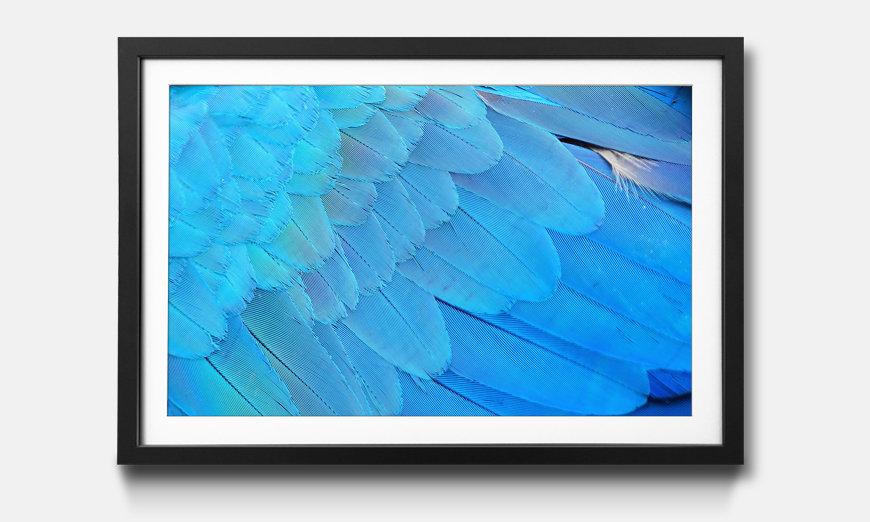 Das gerahmte Wandbild Bird Feathers