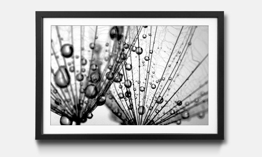 Das gerahmte Wandbild Dandelion Seed