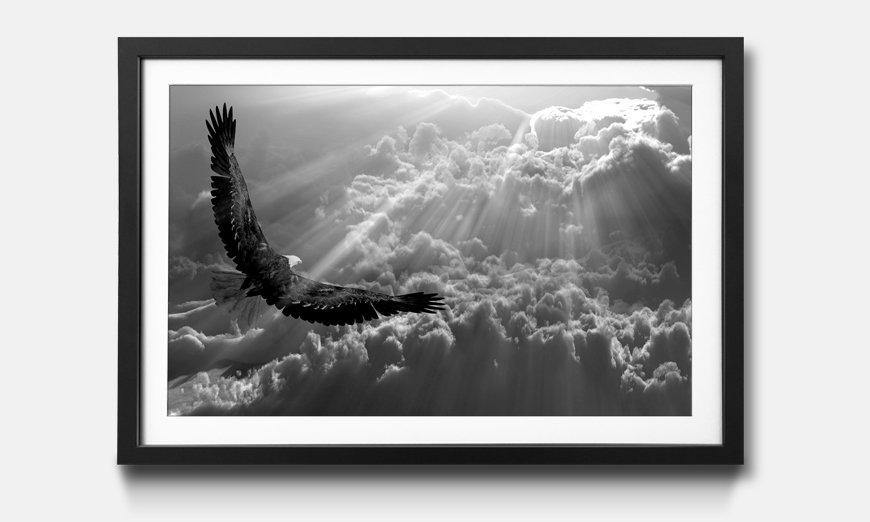 Das gerahmte Wandbild Eagle in Flight