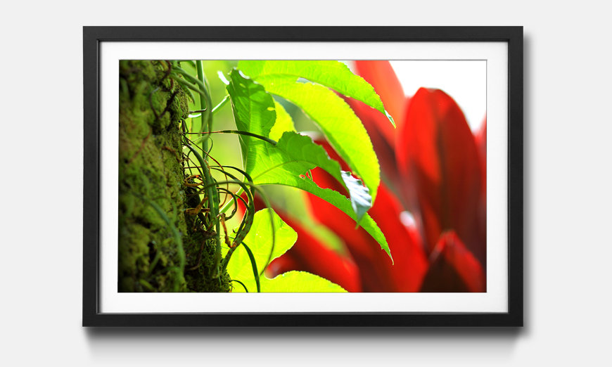 Das gerahmte Wandbild Red Green Nature