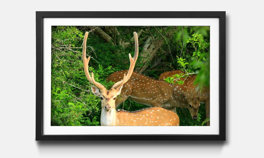 Das gerahmte Wandbild Watching Deer