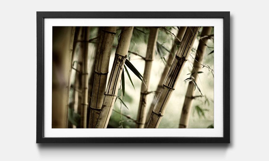 Der gerahmte Druck Bamboo Forest
