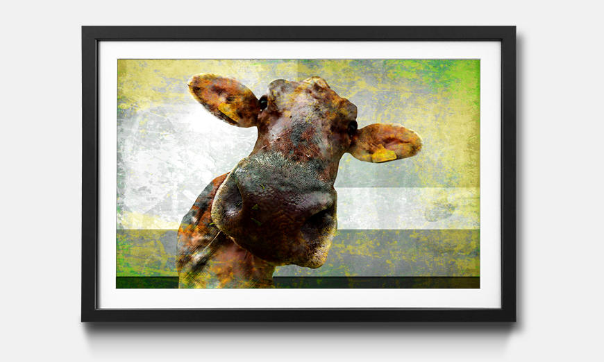 Der gerahmte Druck Cow Nose