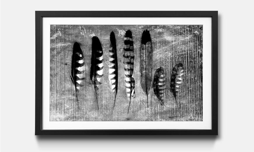 Der gerahmte Druck Monochrome Feathers