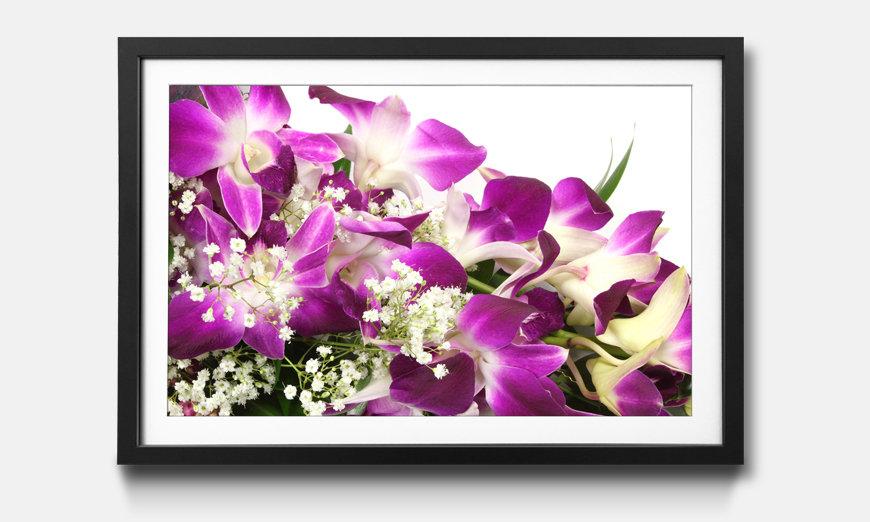 Der gerahmte Druck Orchid Blossom