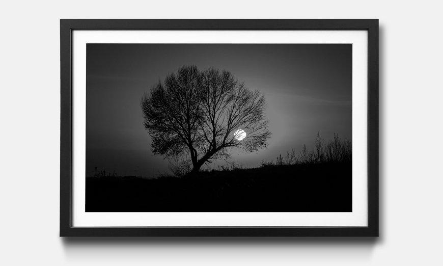 Der gerahmte Druck Tree Sunset