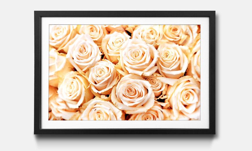 Der gerahmte Kunstdruck Creamy Roses