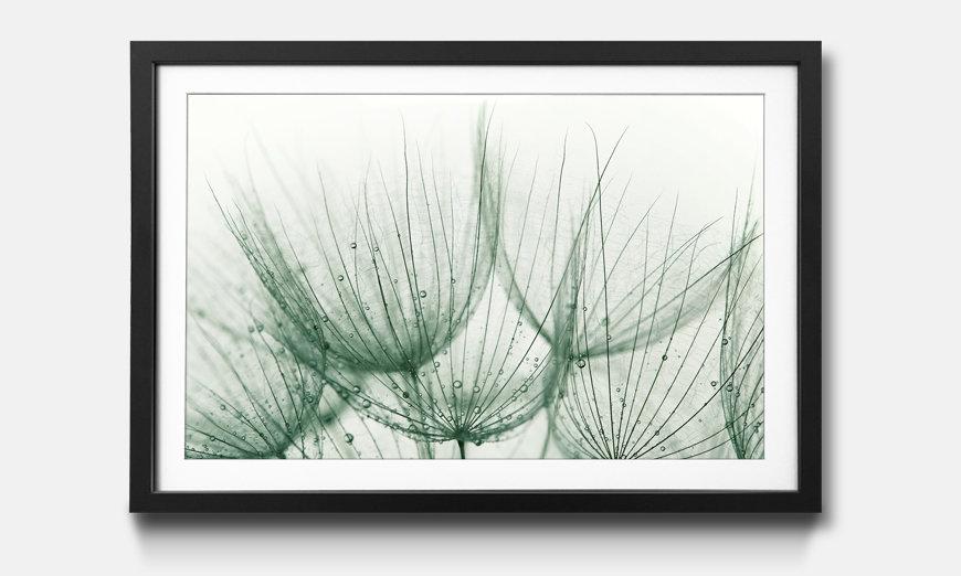 Der gerahmte Kunstdruck Detail of Dandelion