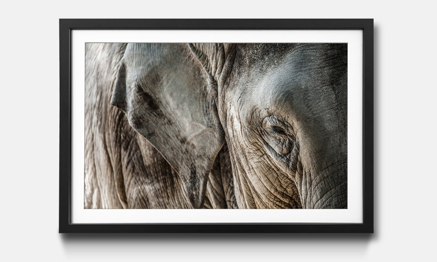 Der gerahmte Kunstdruck Elephant Close Up