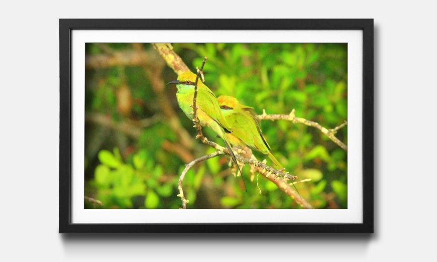 Der gerahmte Kunstdruck Green Birds