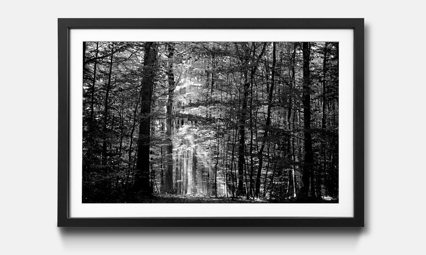 Der gerahmte Kunstdruck Into The Forest