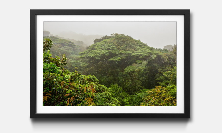 Der gerahmte Kunstdruck Jungle