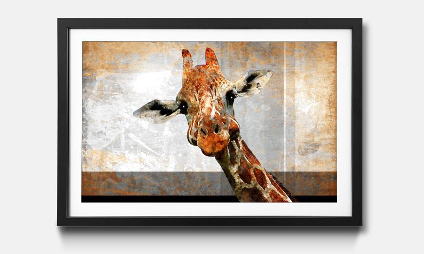 Der gerahmte Kunstdruck Mr. Giraffe