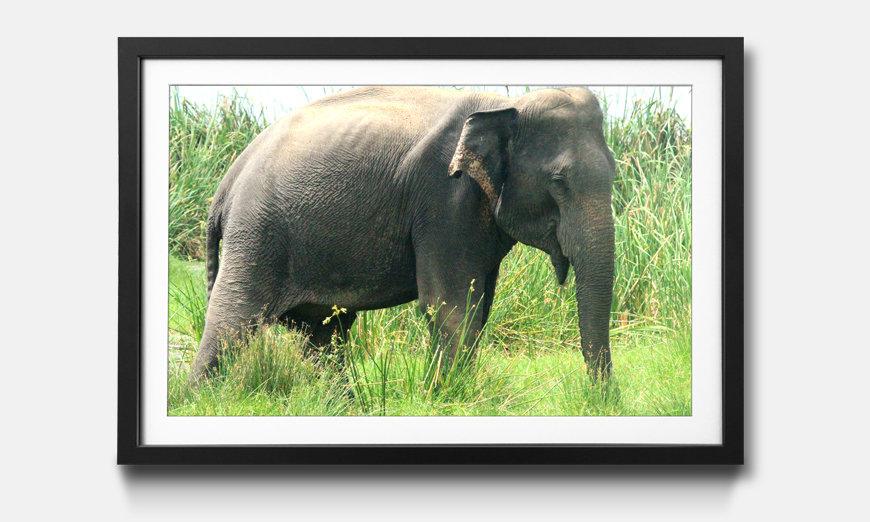 Der gerahmte Kunstdruck Old Elephant