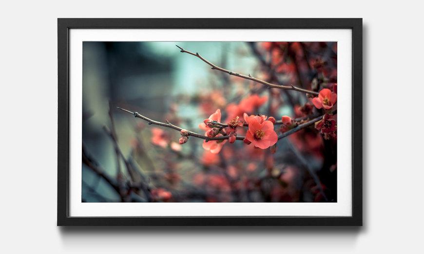 Der gerahmte Kunstdruck Pink Blossoms