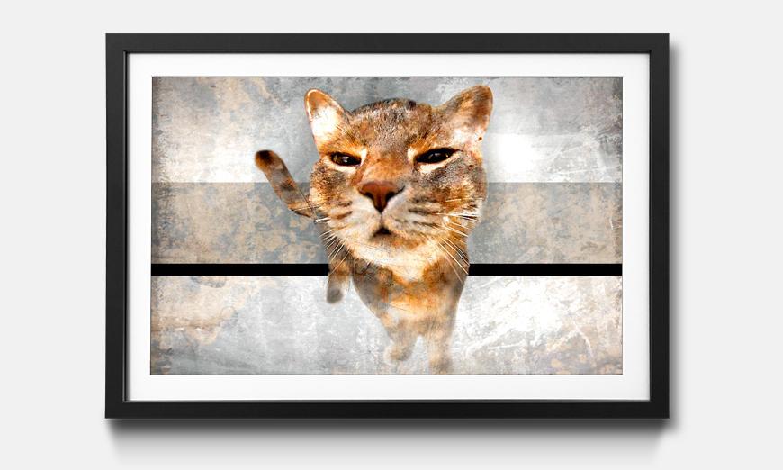 Der gerahmte Kunstdruck Smooth Cat