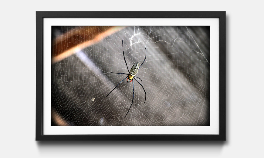 Kunstdruck gerahmt Beauty Of Spider